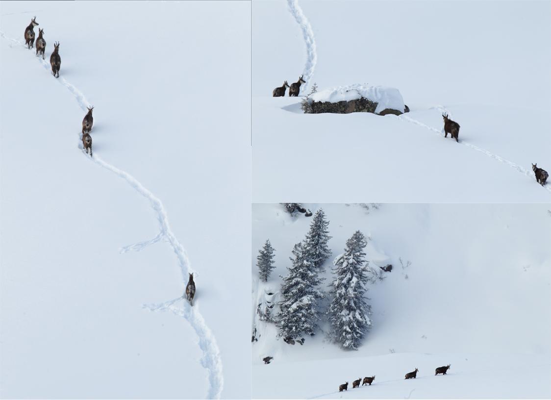 Impronte d'inverno