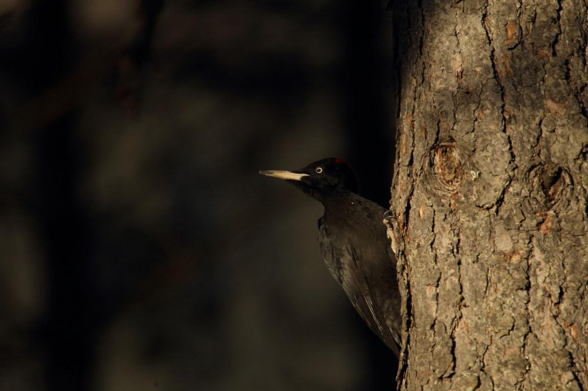 Enrico Delvai fotografo naturalista, foto di uccelli