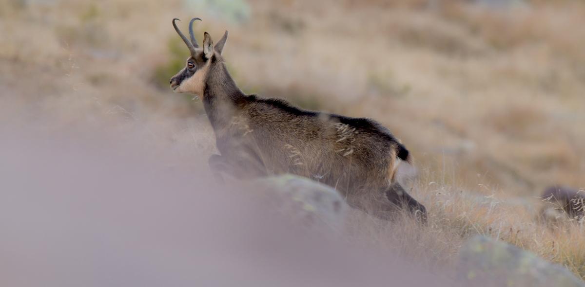 Enrico Delvai fotografo naturalista, foto di mammiferi