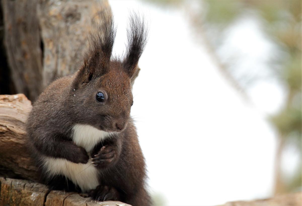 sguardo di scoiattolo 2