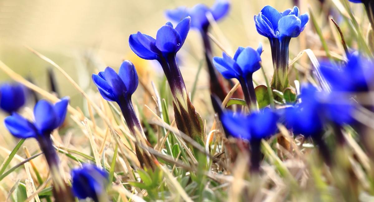 Aria di primavera